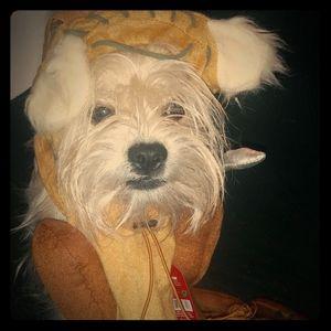 Disney Star Wars EWOK dog costume